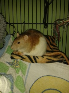 terry hammock